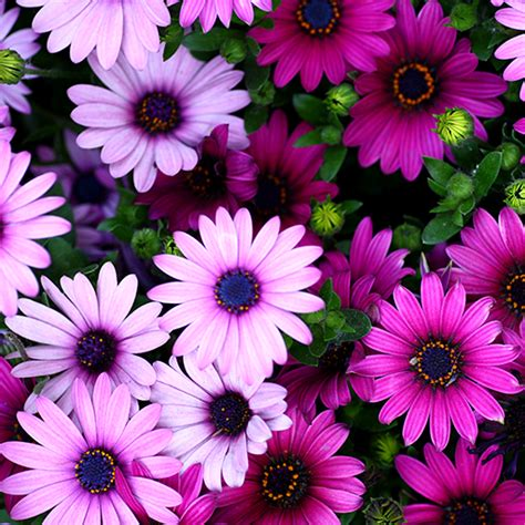 Live Flowers Wallpaper For Pc by Flowers Live Wallpapers