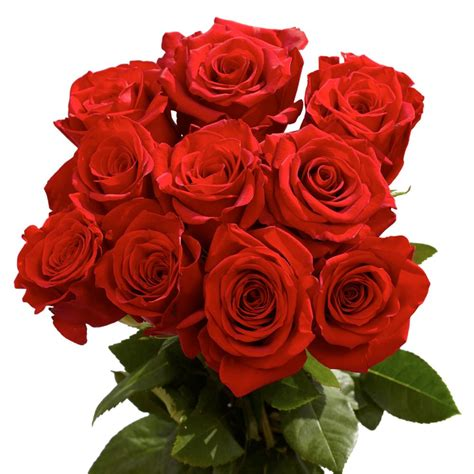 roses top globalrose fresh roses best of the best 125