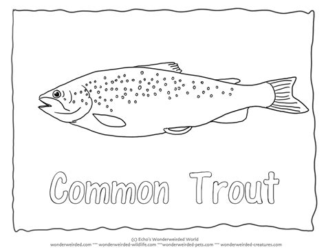 printable trout coloring pages printable best free
