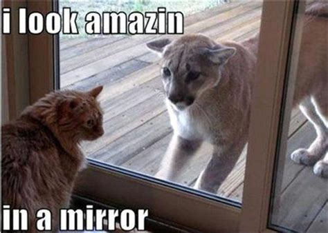 Silly Animal Memes - 30 funny animal captions part 11 30 pics amazing