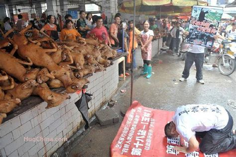 dogs in china yulin festival in china occupy for animals