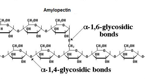 r carbohydrates for u 9 carbohydrates polysaccharides biology notes for a