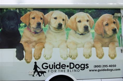 guide dogs for the blind pin by elisha silva on guide dogs for the blind pinterest