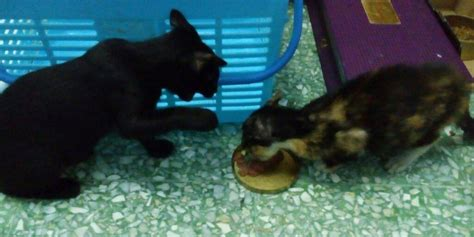 Kucing Growssy Cat Kitten angie s i quot rescued quot a cat tuesday april 19th