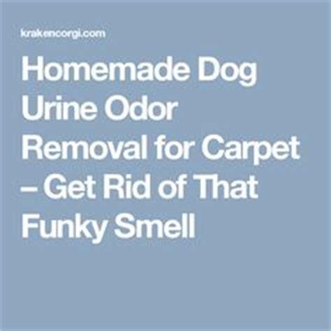 homemade dog shoo for good smell 3 stall horse barn plan barn ideas pinterest sliding