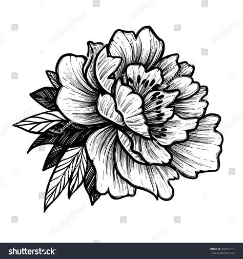 hand drawn vector illustration peony flower stock vector