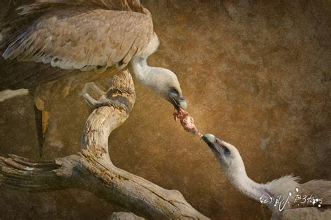 Fighting For by Animals Fighting For Food Www Pixshark Images