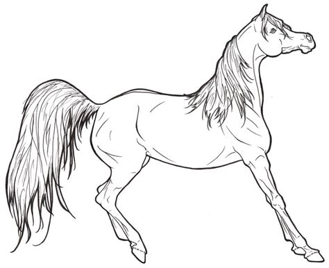 arabian horse lineart by requay on deviantart