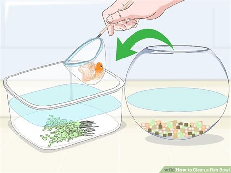 how to clean a fish bowl 12 steps with pictures wikihow