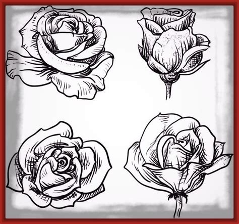 Imagenes De Rosas Hermosas Para Dibujar | imagenes hermosas de rosas rojas con frases imagenes de rosa