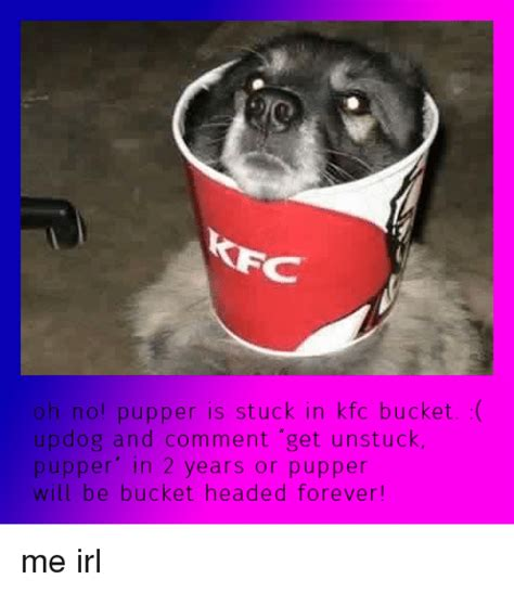 Kfc Bucket Meme - oh no pupper is stuck in kfc bucket updog and comment get