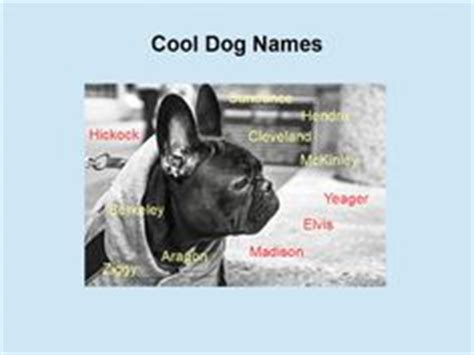 badass puppy names badass names dogs names names and dogs