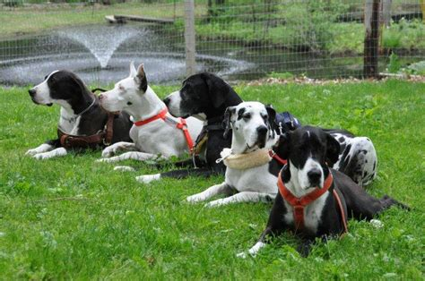 service dogs ma service project inc nonprofit in ipswich ma volunteer read reviews donate