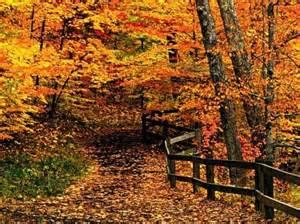 beautiful fall colors beautiful pics
