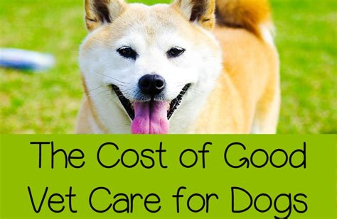 dog c section cost medical care for dogs it s not cheap dogvills