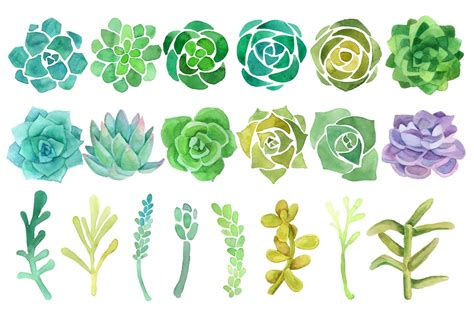 succulent clip watercolor cactus and succulent clipart set by abracadabra