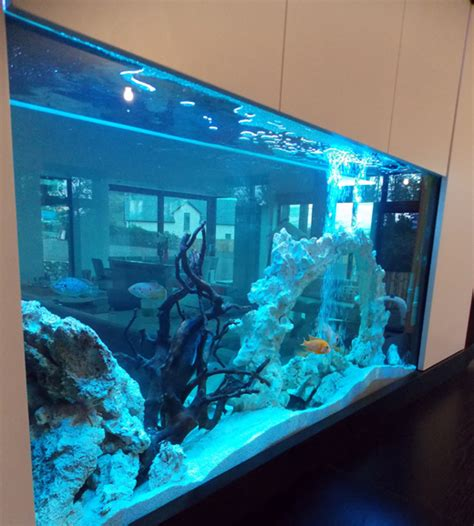 aquarium design ireland exotic design republic of ireland