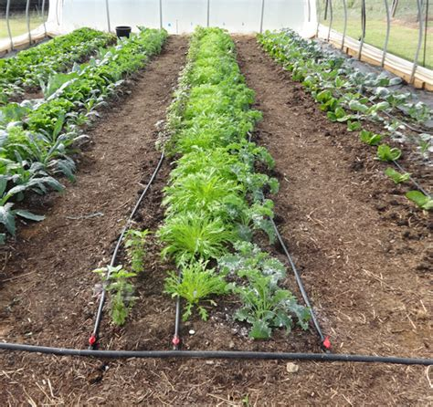 vegetable garden drip irrigation kit garden inspiration