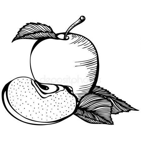 clipart bianco e nero disegno bianco e nero di apple vettoriali stock 169 ennona