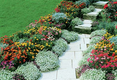 ricanti in vaso fiori perenni per fioriere 28 images piante ricanti