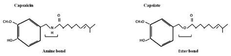 ester bond structures of capsaicin and capsiate capsiate has an