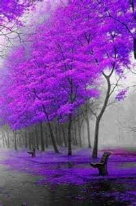 where does the color purple take place 25 best ideas about purple trees on purple
