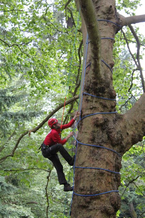 climbing tree ohio tree trimmer participates in international tree climbing competition jacob