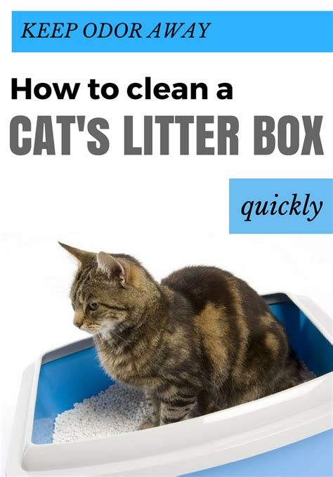 how to keep out of cat litter how to get clay cat litter out of carpet home everydayentropy