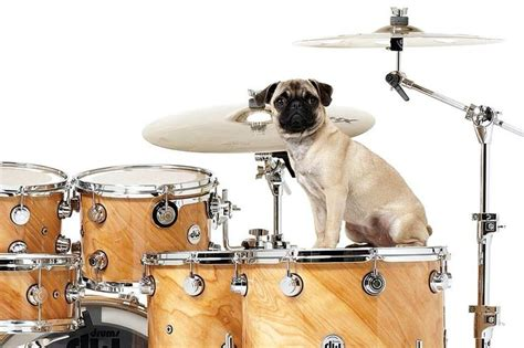 pugs and drummers rock and rocks and rock and roll on