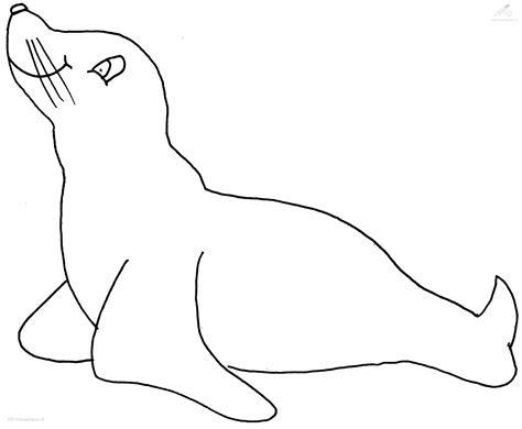 coloring page sea lion sea lion coloring pages