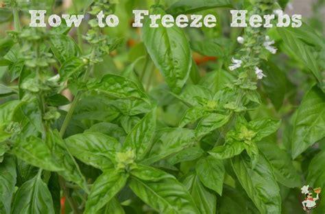 how to freeze herbs recipe pocket change gourmet