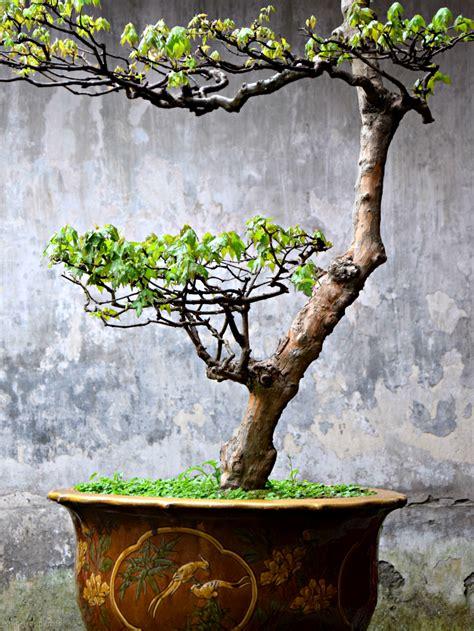 Treppen Im Garten 1559 smg treppen zu klein f 252 r treppenstufen bonsai im yu garten