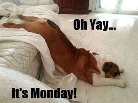 Monday Dog Meme - monday dog monday memes pinterest mondays funny