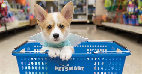 puppies at petsmart petsmart 2016 puppy guide filled with 250 in coupons only 19 99 puppy events