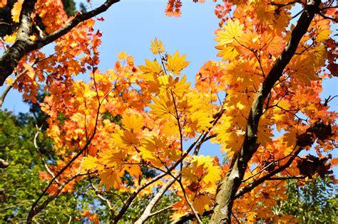 wallpaper bunga gugur gambar pemandangan cabang menanam pedesaan sinar