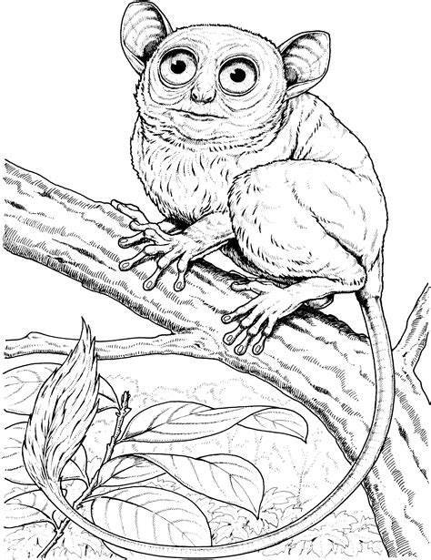 marmoset monkey coloring page monkey coloring pages
