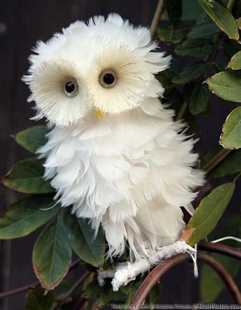 white owl looks like a flower