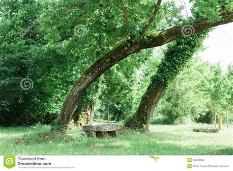 bench in forest bench in a stunning forest underneath some trees stock photography image 35949602