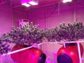 Growing Lights by Led Light Design Amazing Commercial Led Grow Lights