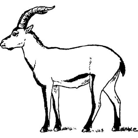 new year goat drawing goat line drawing clipart best
