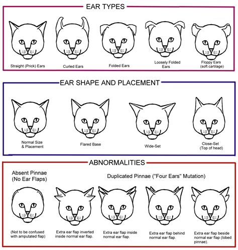 ear types cat colour and pattern charts and article detailed and thorough dogs cats