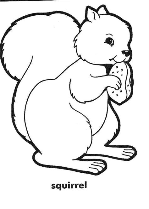 coloring page of a squirrel squirrel coloring pages and coloring on pinterest