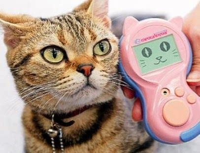 Are Cats The New Must Accessory by The Ipkat The Next Quot Must Quot Accessory Competition