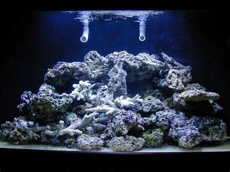 aquarium design guidelines aquarium coral reef guide aquarium design ideas
