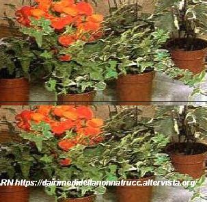 innaffiare fiori vacanza consigli per innaffiare piante e fiori mentre si 232 in