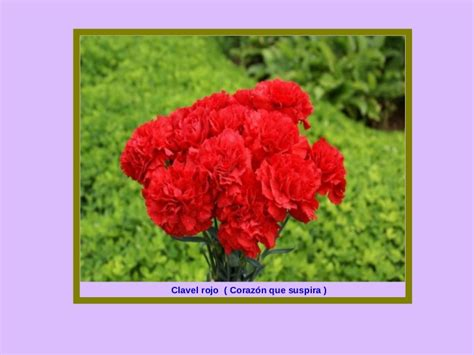 imagenes flores y nombres las flores y el significado de sus nombres 1