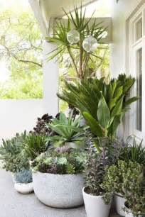 25 best ideas about potted plants on potted