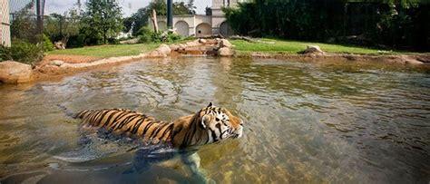 imagenes de hábitats naturales h 225 bitat artificial para tigres im 225 genes y fotos