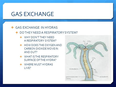 respiratory system gas exchange ppt video online download gas exchange ppt video online download