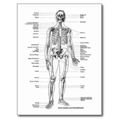 Skeletal System Worksheets For College by 5 Best Images Of Printable College Anatomy Worksheets